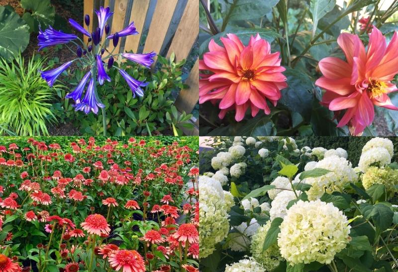 Planning For Summer Color In Your Kirkland Area Landscape Design