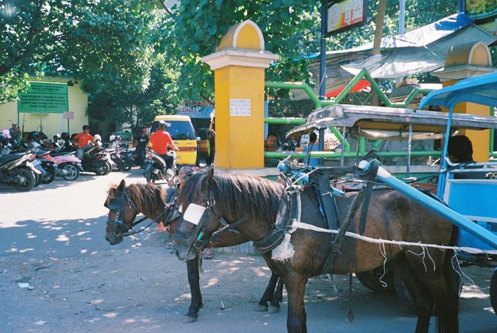 チドモ。ポニーではなくてもともとこのくらいの大きさの馬を使った馬車。