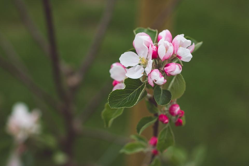 blossom1-1.jpg