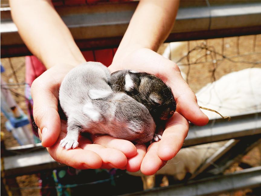 Easter2015_bunniesres72.jpg