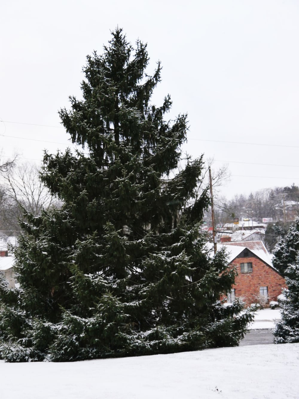 evergreen_firstsnow_72.jpg