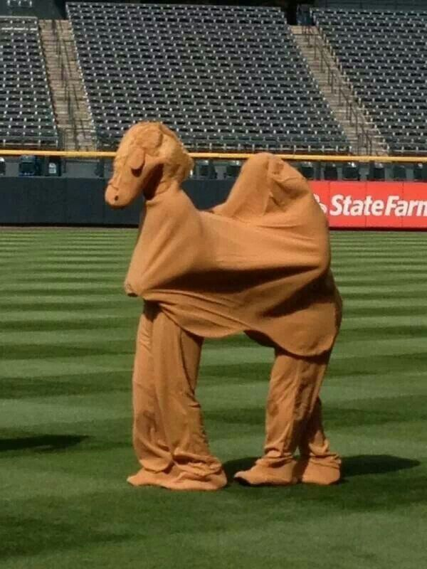 John Axford Camel