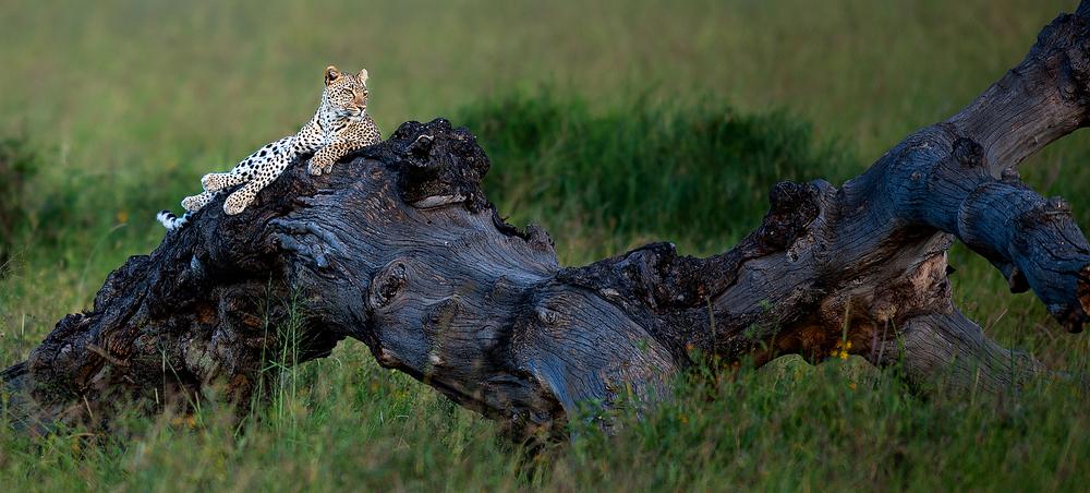 2012 Tanzania - D3X0746b - WEBSITE.jpg