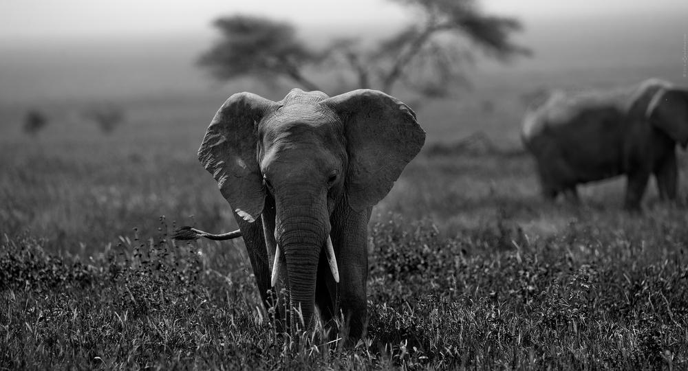 2012 Tanzania - D3X1769a - WEBSITE.jpg