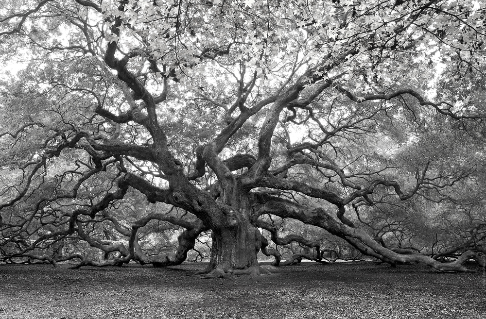 2011-11-15 - Angel Oak - D3X3845c - B&W iPhone.jpg
