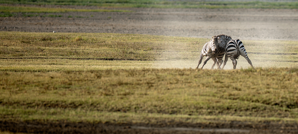 2012 Tanzania - D3X1968b - WEBSITE.jpg