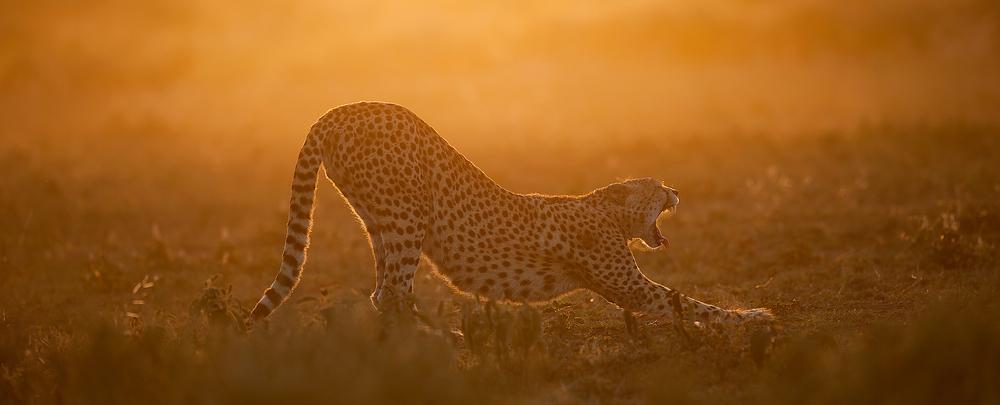 2012 Tanzania - D3X9562a - WEBSITE.jpg