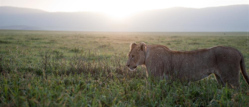 2012 Tanzania - DSC6348a - WEBSITE.jpg