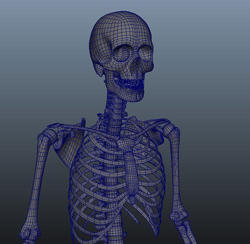 skeleton_03.jpg