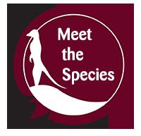 Meet the Species