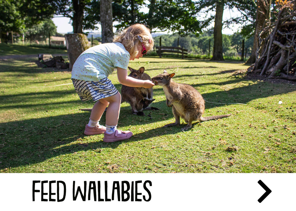 wallabies_attraction.jpg