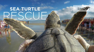 Smithsonian Earth: Sea Turtle Rescue