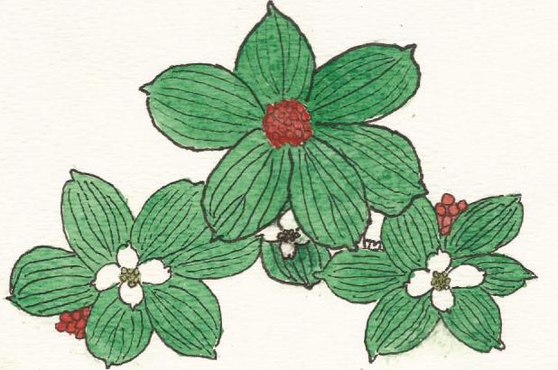 Watercolor by Happy Marsh