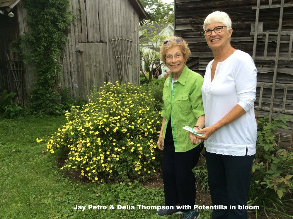 Jay Petro and Delia Thompson with pontentilla in bloom.jpg