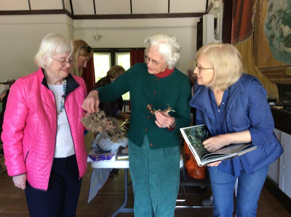 Airlie Lennon, Patty Paine and Merridith Hanna examining dahlia tubersIMG_0224.JPG