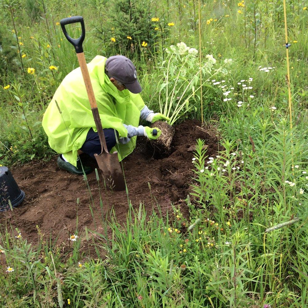 Mo Ecclesine planting