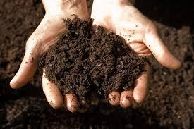 Local soil testing