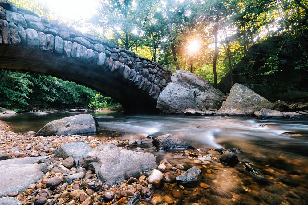 A morning walk through Rock Creek Park is a great start to any day.