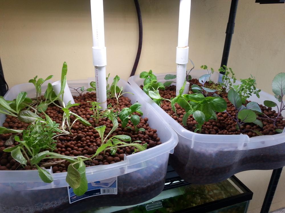aquaponic_plants_bin.jpg