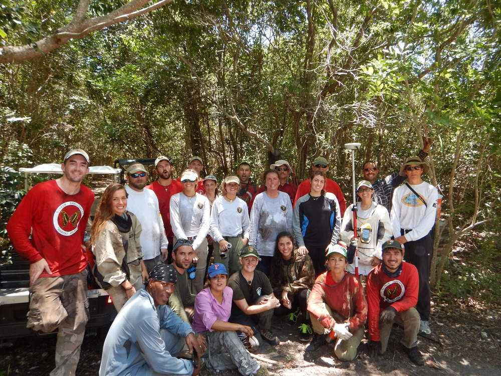 """Staff (NPS) and volunteers (Sierra Club) participating in the """"Schaus swallowtail habitat enhancement project""""."""