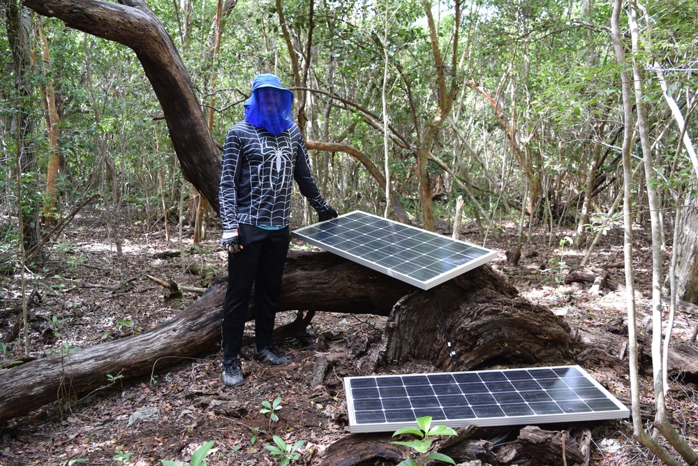 Solar panels used to power HD video surveillance cameras focused on torchwood and wild lime in the forest.