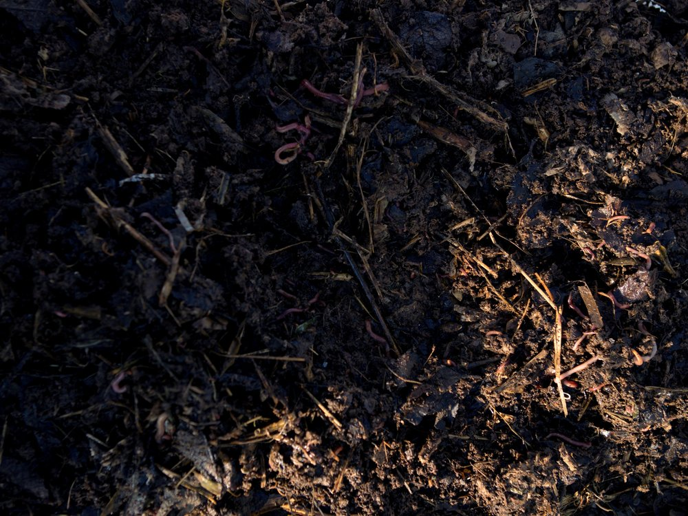 Indendørs kompost - Ormekompost er en såkaldt kold kompost, hvor kompost-orme omdanner madaffald til kvalitetskompost. Det kan fx. foregå i vores specialbyggede komposterings-bord, hvor komposteringen foregår i flere tempi, så der hele tiden kan hentes ny, næringsrig ormekompost fra en af bakkerne i bordet.Foto:EnergiCenter Voldparken i Nordvest i København genanvender deres madaffald til god næringsrig gødning, som de løbende kan hente i BIOARKs specialdesignede komposterings-bord.