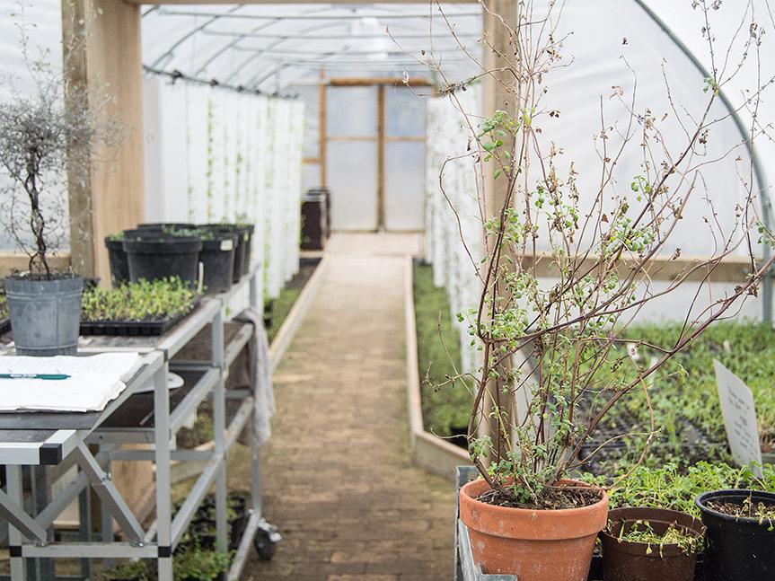 BIOARK - Polytunnel med grotårne, spiregrønt, mikrogrønt og grøntsager.