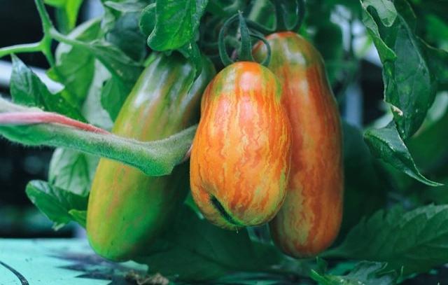 BIOARK - Dyrkning - Grøntsager