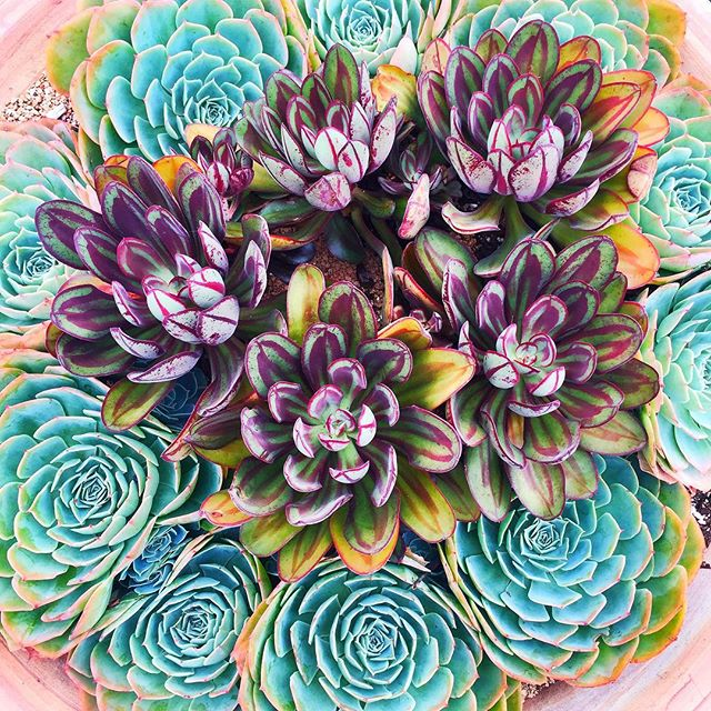 They say green is one of the most soothing colors so take a break to enjoy these succulents #omagbreathingspace (📷: @misspaulalee)