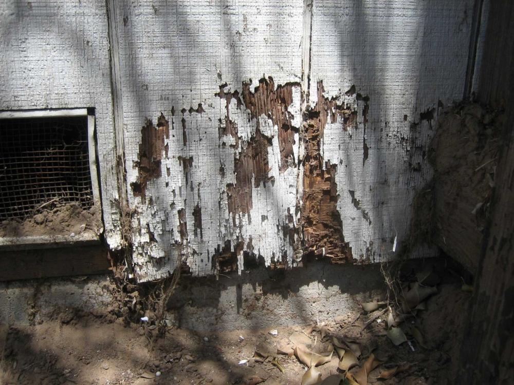 Termite_damage2.jpg