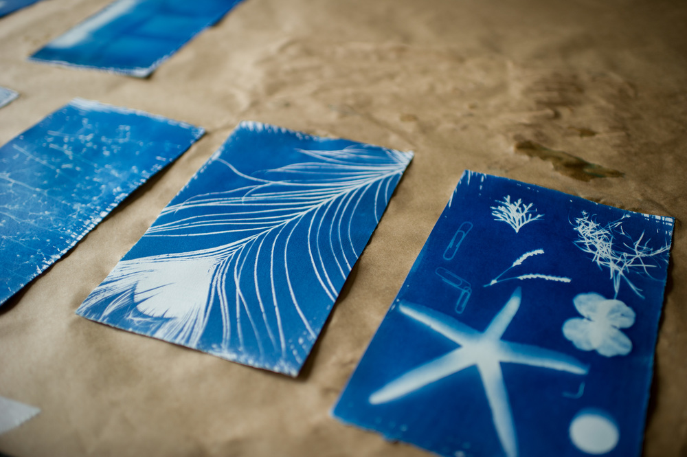 Cyanotypes Drying - Olivia Couch's on the left and Eve Sexton's on the right