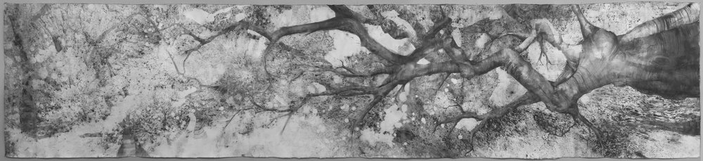 """Branching Out"" by  Britany Baker,  103x23in, charcoal on paper (2016)"