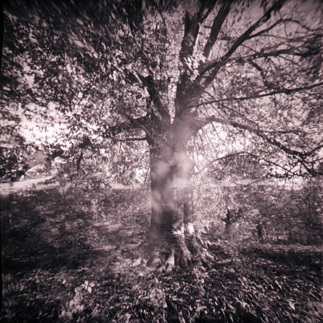 """Cherokee Park Tree Study #1"" by Probus, 11x11in, silver gelatin print (2016), $300 