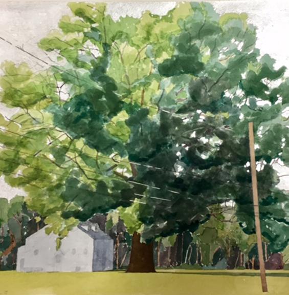 """Kentucky's State Champion Swamp Chestnut Oak"" by Gretchen Treitz, 14x14in, watercolor, silverleaf (2016)"
