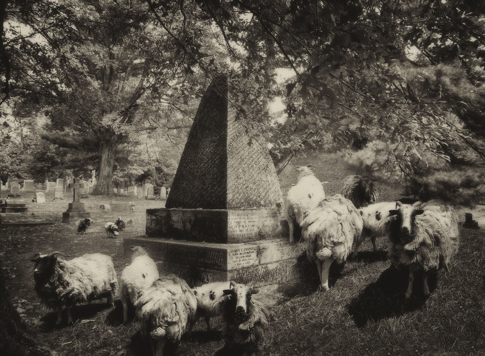 """Cemetery Sheep"" by Marcia Hopkins, 17x22in, digital archival print (2017), $500 