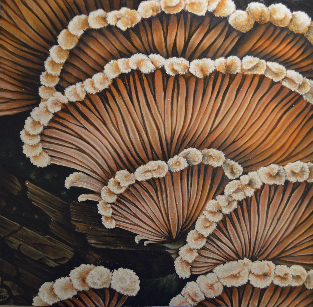 """Split Gill Mushroom"" by Devan Horton, 24 x 24in, oil on panel (2017), $800 