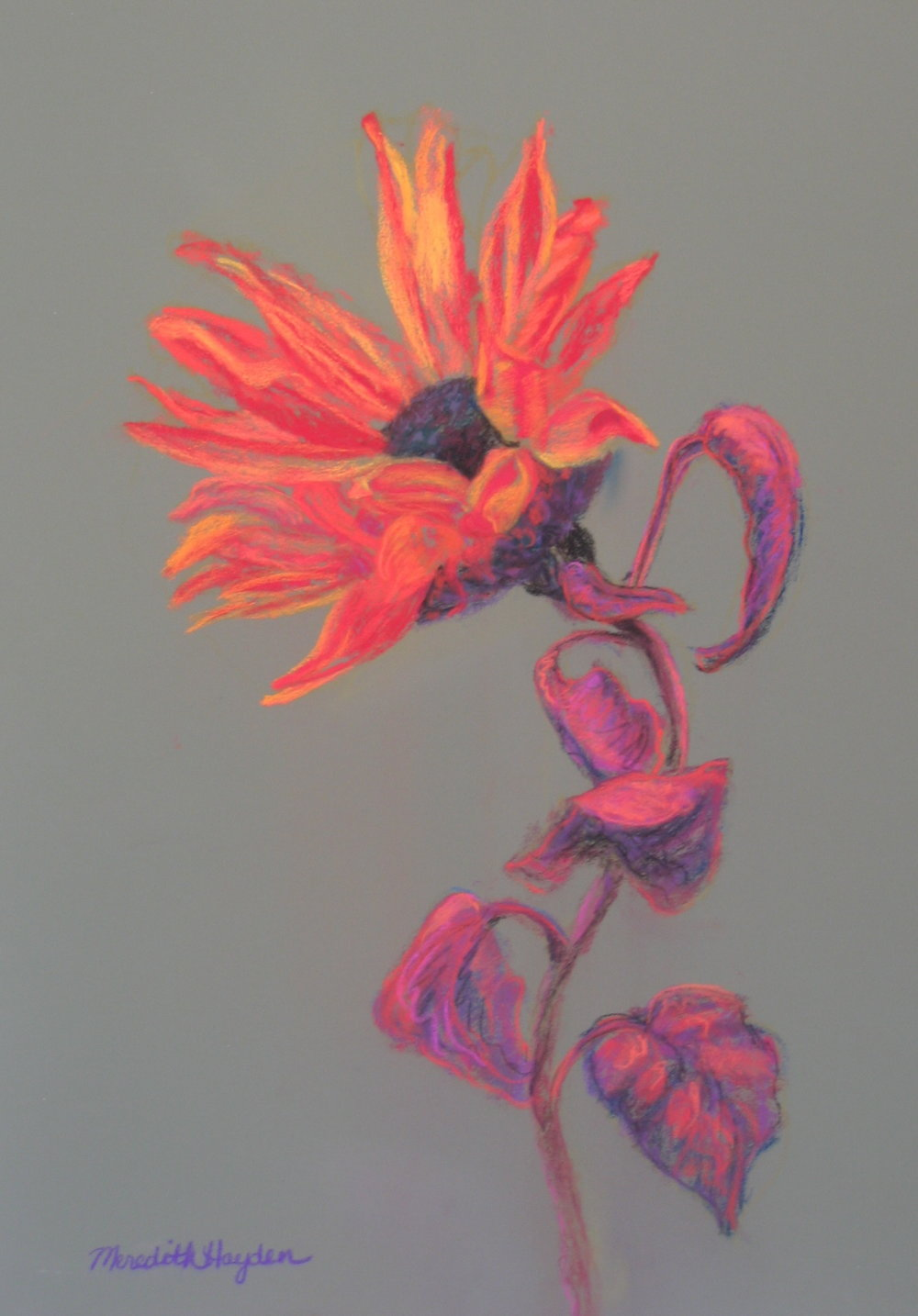"""Fiery"" by Meredith Hayden, Chalk Pastel, 24x30in, 2007, Private collection"