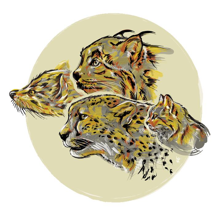 cat-evolution-01-01-700px.jpg
