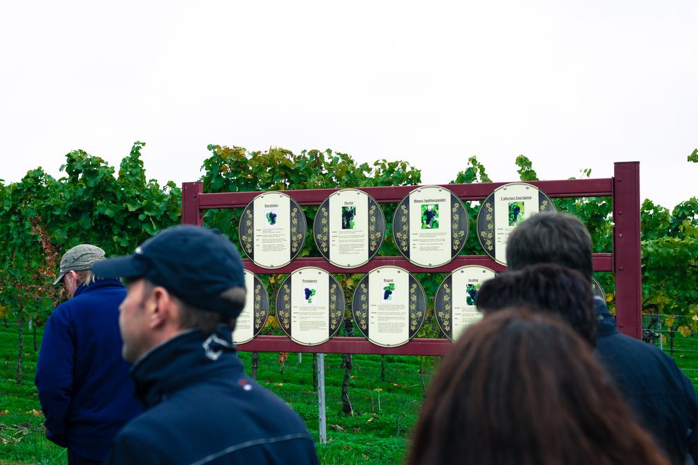35 mm-20151017-153841- Weingut Pfalz.jpg
