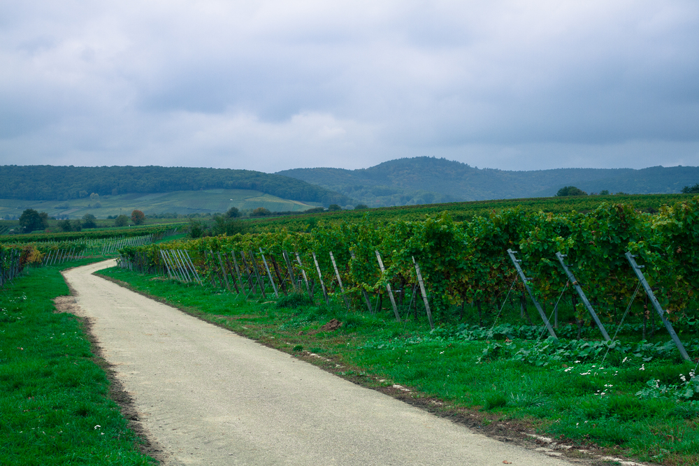 35 mm-20151017-160010- Weingut Pfalz.jpg