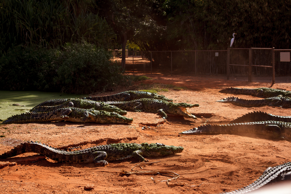 35 mm-20151222-151243-Broome Crocodile Farm.jpg