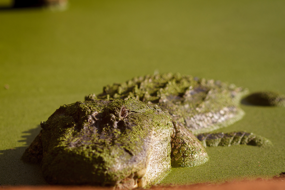 135 mm-20151222-162454-Broome Crocodile Farm.jpg