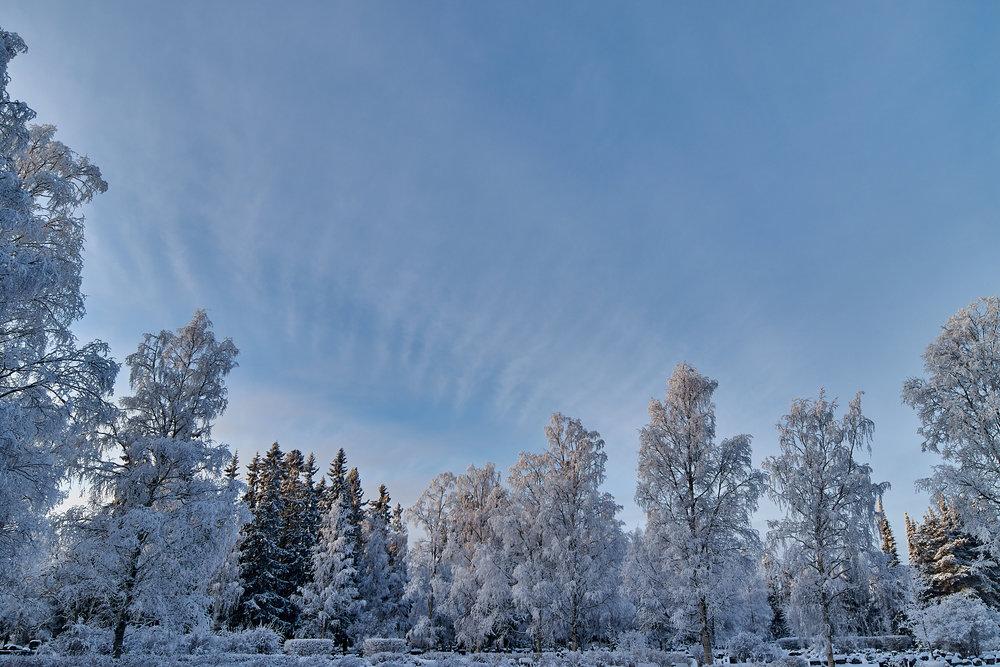 15 mm - 2019-01-24 13.08.21 - Oulu Week 4 Mix.jpg