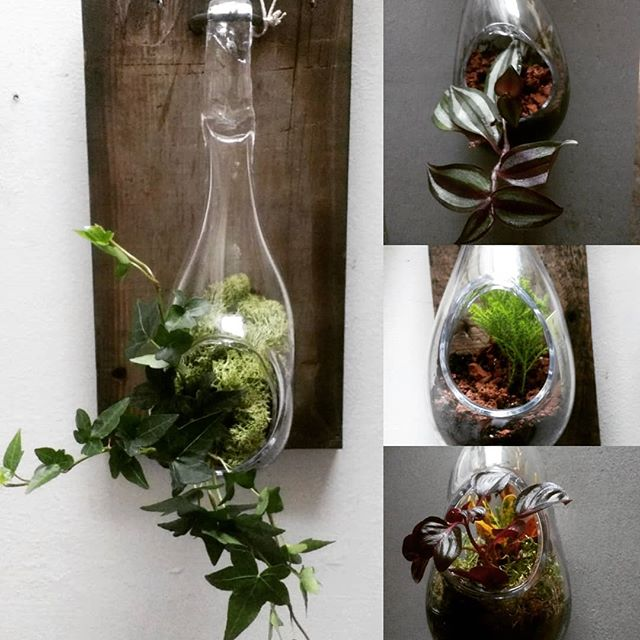 Planted tear drop terrariums. $70 each Also available for barter. I will be hanging out with this living artwork every evening this week at my studio. DM if you would like to stop by for some handblown glass gifts.