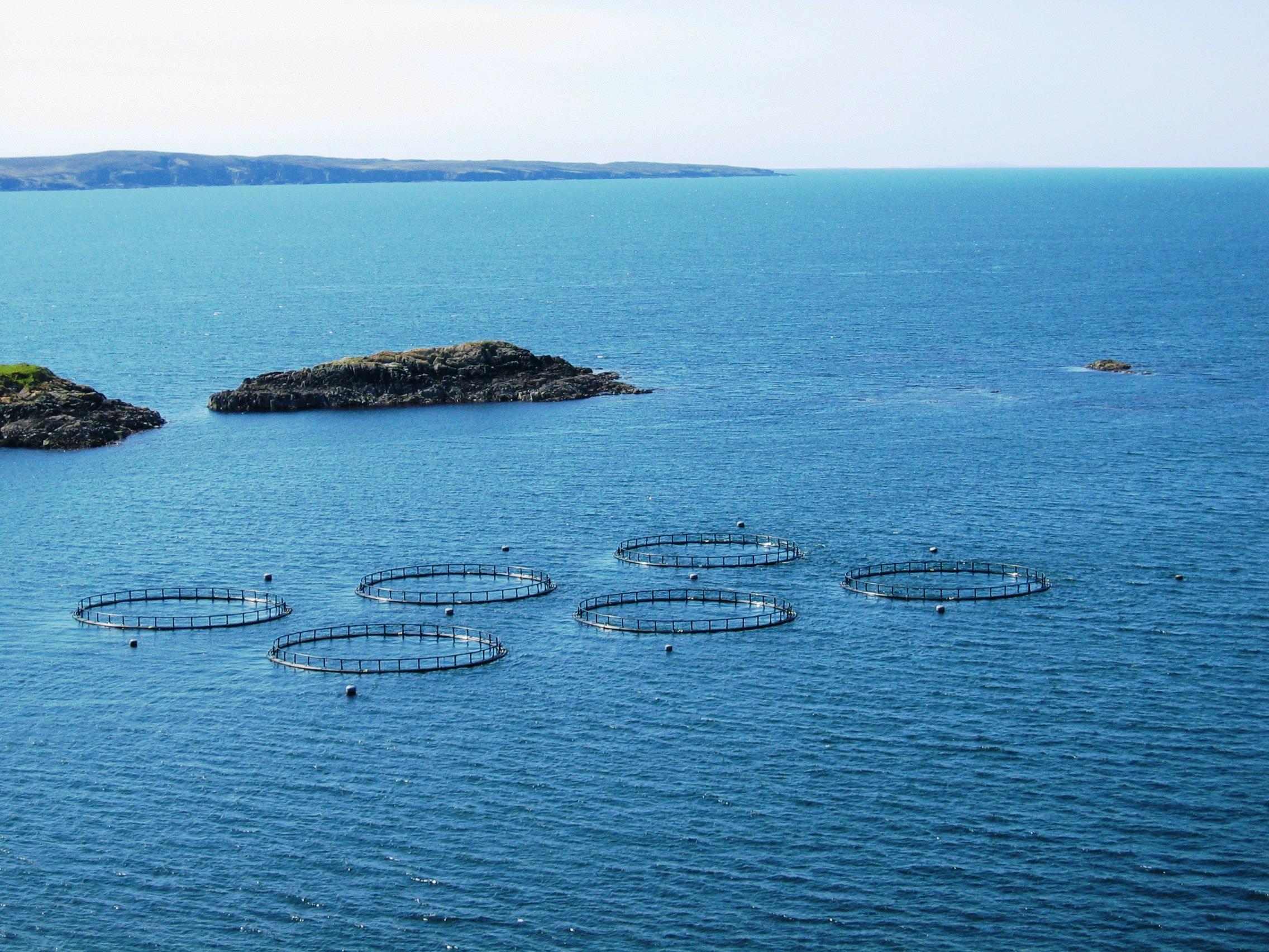 Мексика и Китай договорились о сотрудничестве в области аквакультуры и рыболовства