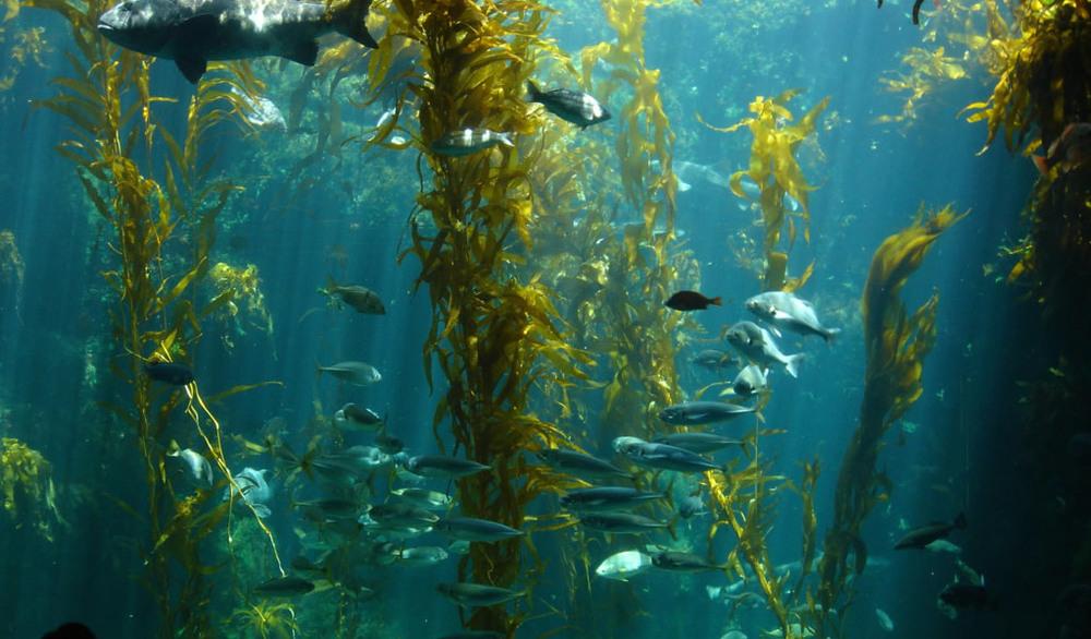 kelpForest.jpg