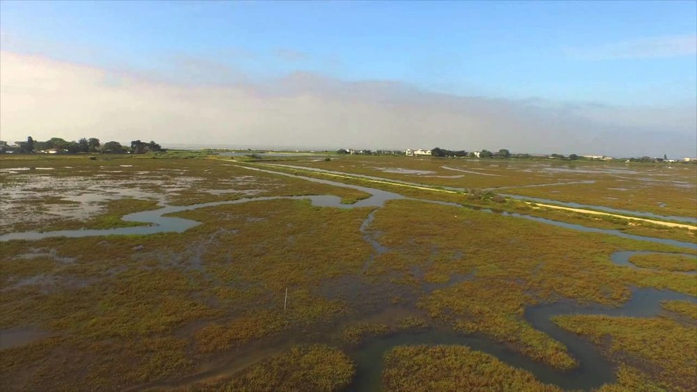 Carpinteria Slough connects marine and terrestrial ecosystems and is surrounded by urban development.