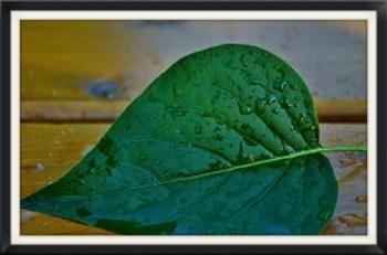 Heart Chakra- Love, joy, inner peace