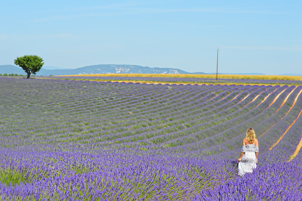 provence lavendar fields