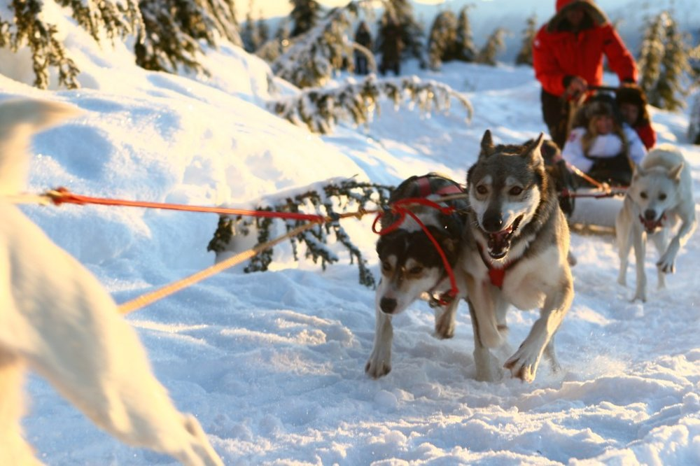 canadian wilderness adventure dog sledding